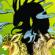 """Комикс """"Битва за Потаенный мир"""" на портале Авторский Комикс"""