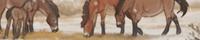 Комикс Horse Age/Эпоха лошадей на портале Авторский Комикс